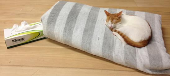 動物病院のおかげで元気な子猫